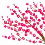 時候の挨拶 2月下旬 季語