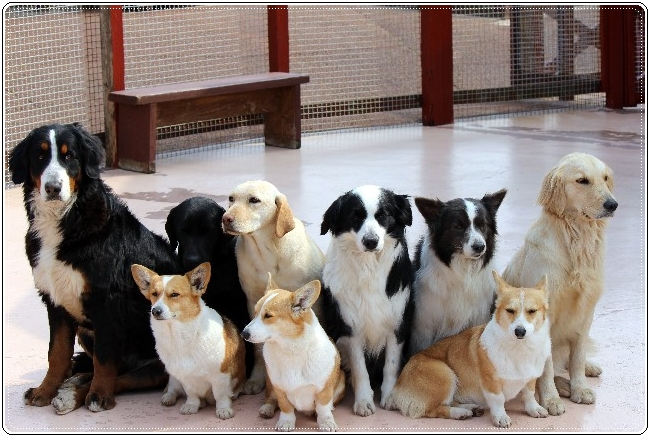 ペットショップで売れ残りの犬はどうなる スタッフ