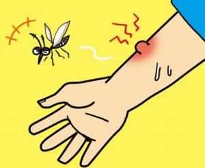 秋の蚊は痒い 夏と違い