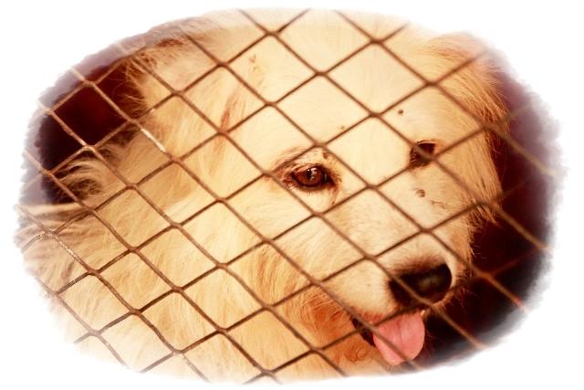 ペットショップで売れ残りの犬はどうなる 保健所