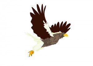 秋生まれの男の子の名前 季語で鳥
