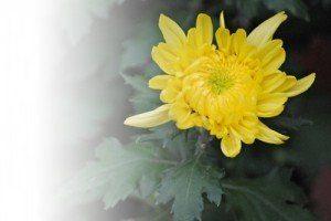 秋生まれの女の子の名前 古風で花
